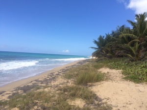 green beach 4